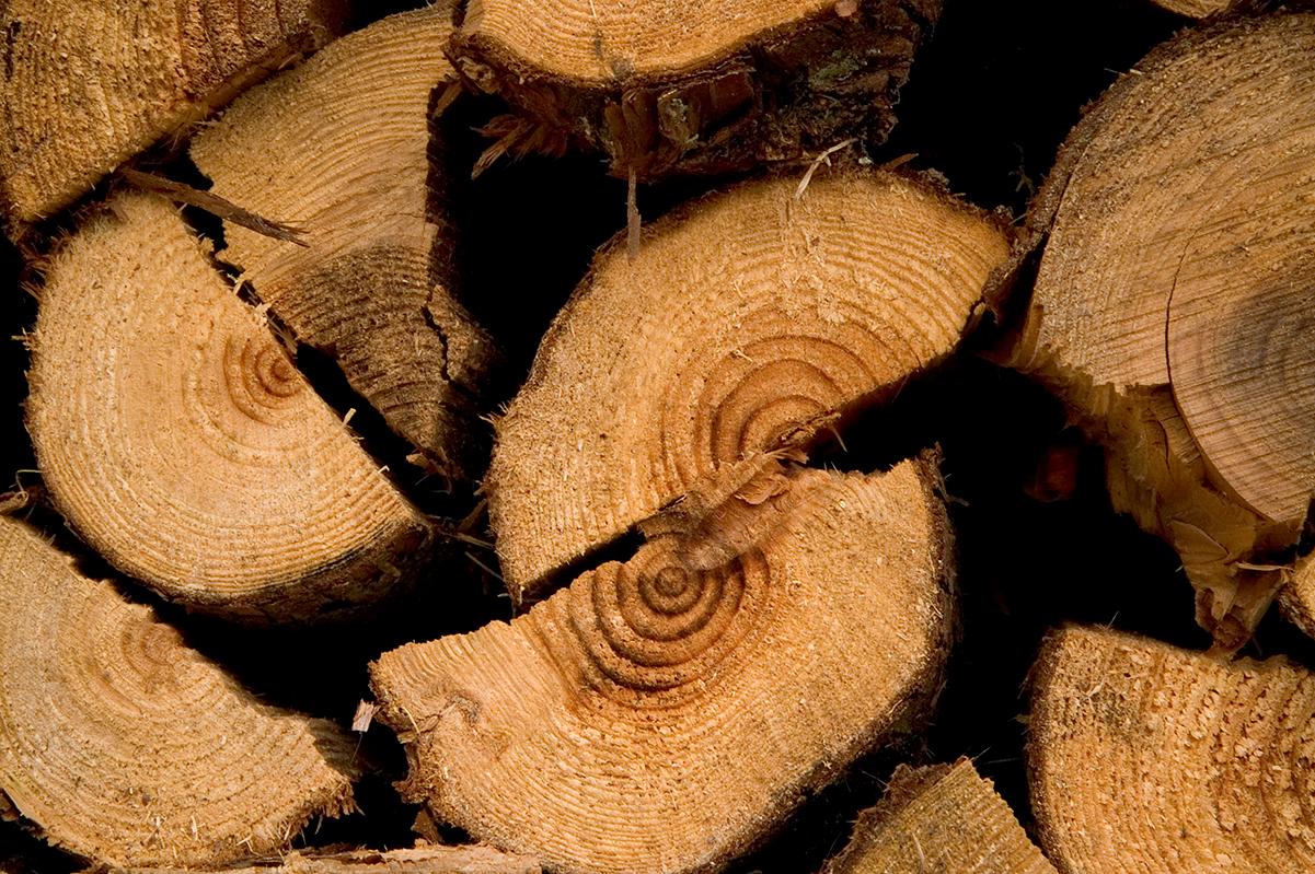 木質バイオマス熱供給モデル事業
