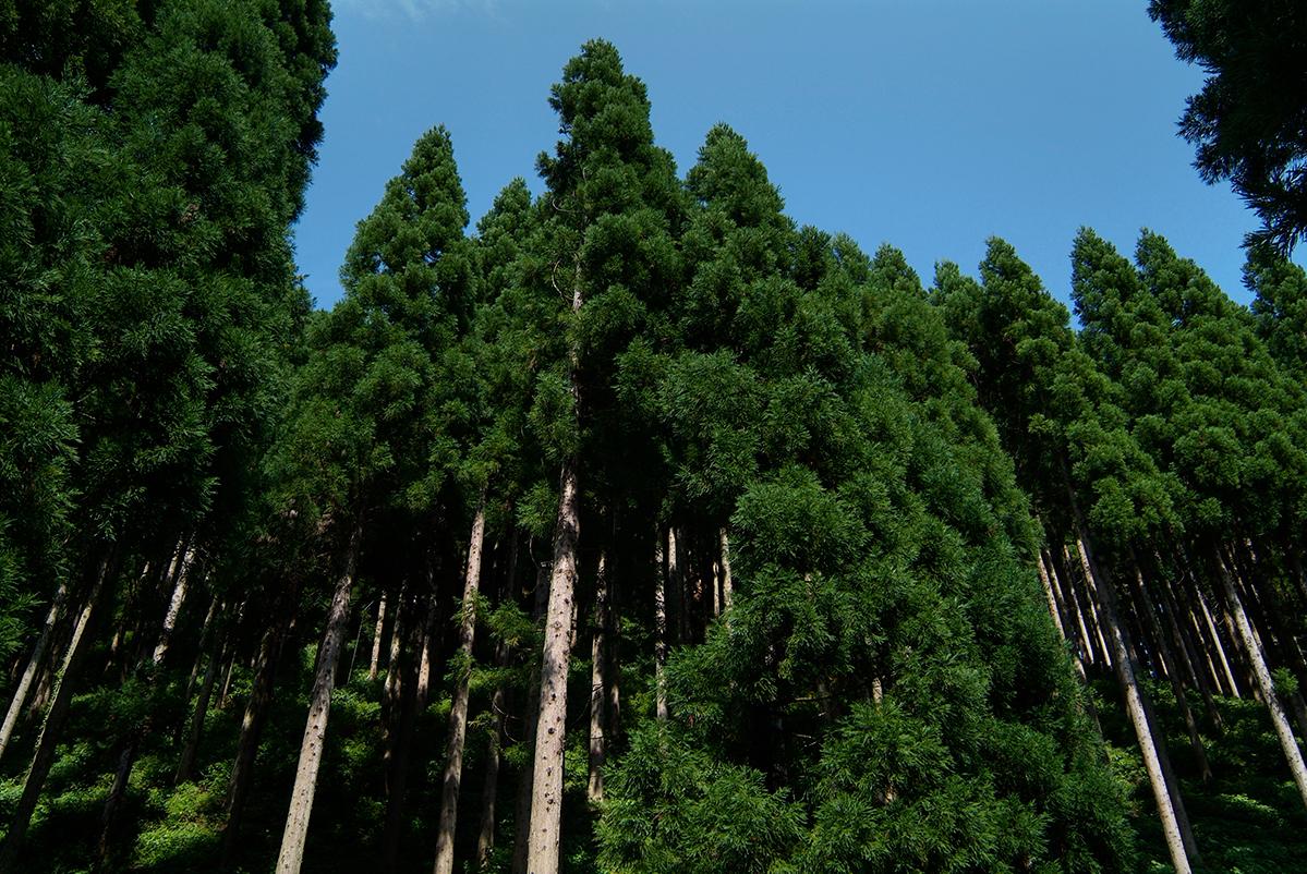 3Dウォーカーによる林分調査@町有林